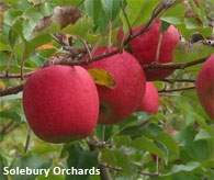 Apple Picking in the Delaware Valley