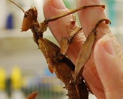 Insectarium Bug Museum Philadelphia