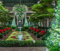 Longwood Gardens Holiday Display