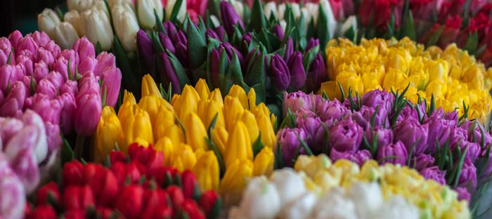 Spring is a wonderful time to enjoy shopping, dining, and the wonderful sights in Bucks County, PA