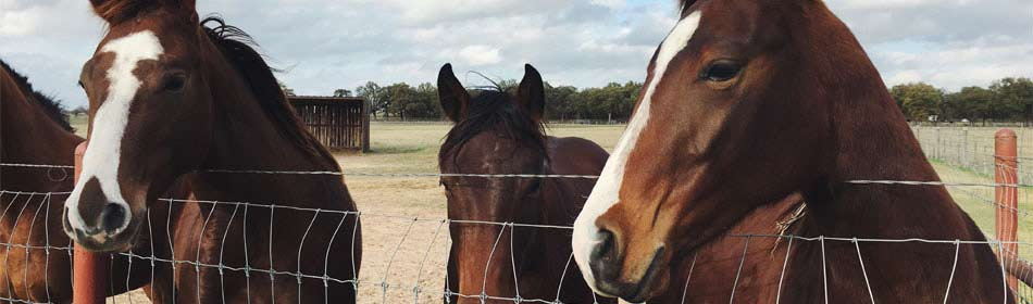 Horse rescues, equine shelters in the Bucks County, PA area