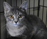 Animal Lifeline in Warrington, PA - cat adoption