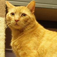 Pet Guide and Pet Adoption