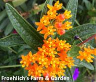 Froehlich's Farm & Garden Center in Furlong, PA