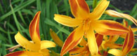 Spring Solstice, Fun Ways to Celebrate Spring