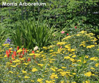 Local attractions,Morris Arboretum in Philadelphia