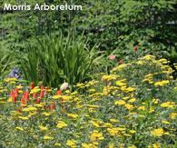 Local attractions,Morris Arboretum in Philadelphia