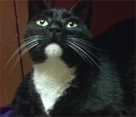 Adobtable Pet, Pet Guide and Pet Adoption