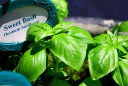 Vegetable & Herb Gardens - Harvesting Tips
