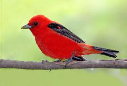 Bird Town Pennsylvania