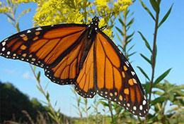 Butterfly Website