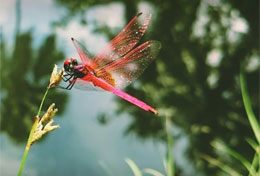 Dragonfly Website